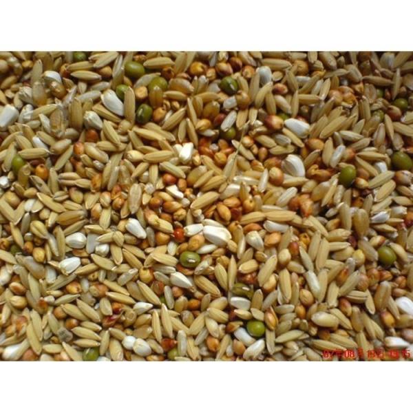 双丙酸铵细谈霉菌毒素对养殖业的危害及预防措施